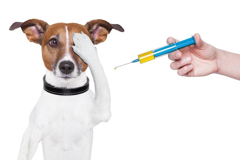 График проведения вакцинации животных